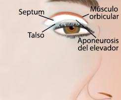 Parpados, detalle incisión